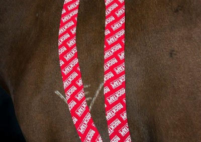 Equine Taping Application