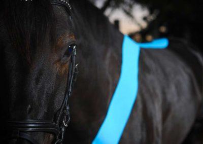 equine-bg